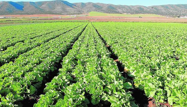 Radiografía de la agricultura ecológica en España